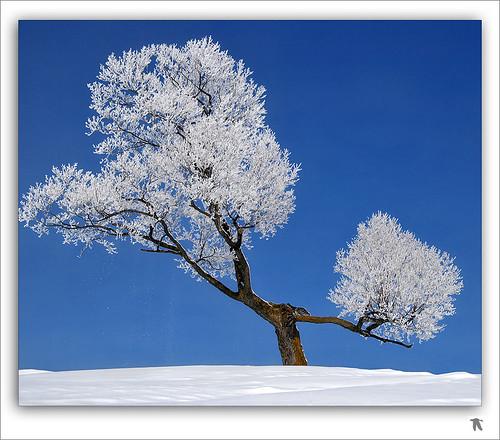 winter snow canada quebec hiver neige icy frimas beautifulpix lefion mywinners bratanesque goldstaraward bestminimalshot mpdquebec