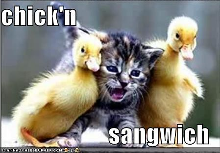 lolcats-funny-pictures-chicken-sandwich