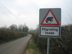 Toad on the road?? by grakki