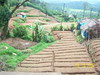 An OOTY Plantation