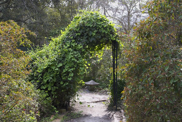 Archway to Nature!