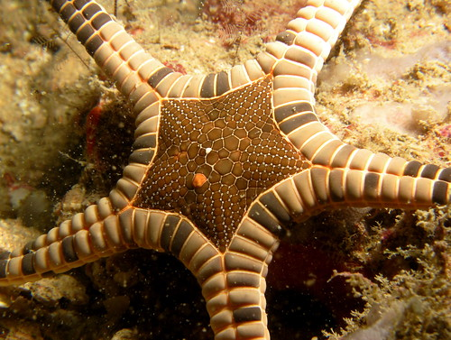 Icon sea star
