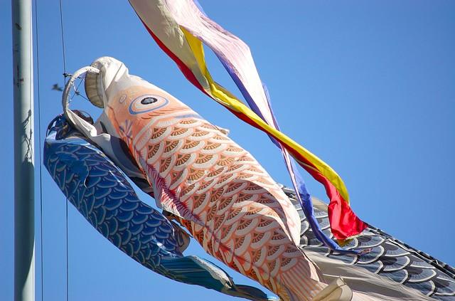 Koi flags flying flickr photo sharing for Japanese flag koi