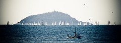 Regata / sea race