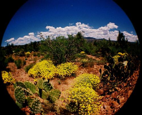 Spring bloom in the desert