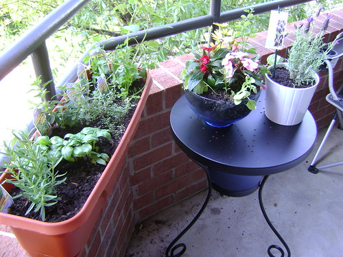 My patio garden