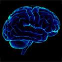 Human brain, Brain 125px