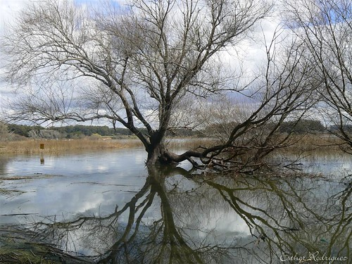 Reflejos en la Laguna