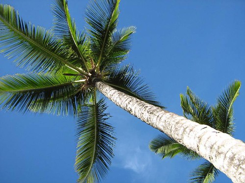 país tropical