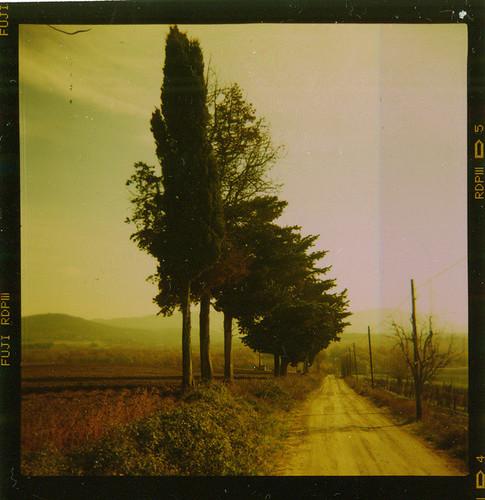 Agfa Click trees