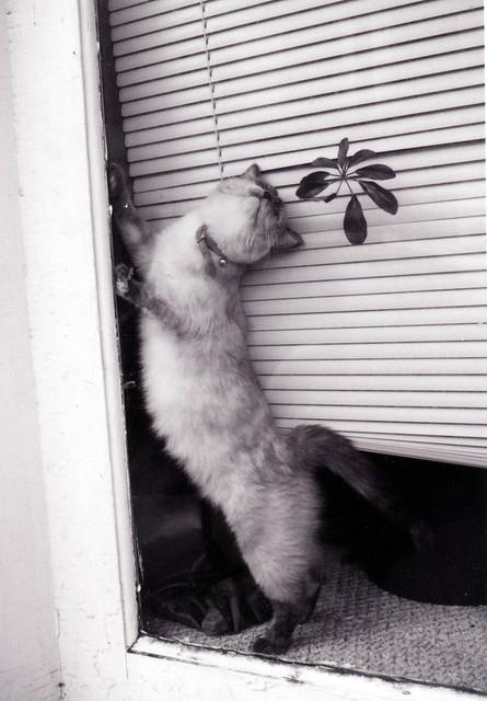 IL-Murphysboro-cat in window