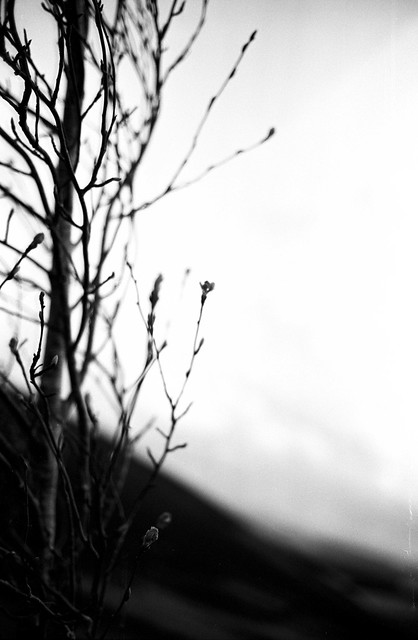 Tree Detail from the Southern Upland Way, Scottish Borders