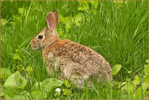 Comptines la ronde des l gumes le cerf mon petit - Mon petit lapin s est cache dans le jardin paroles ...