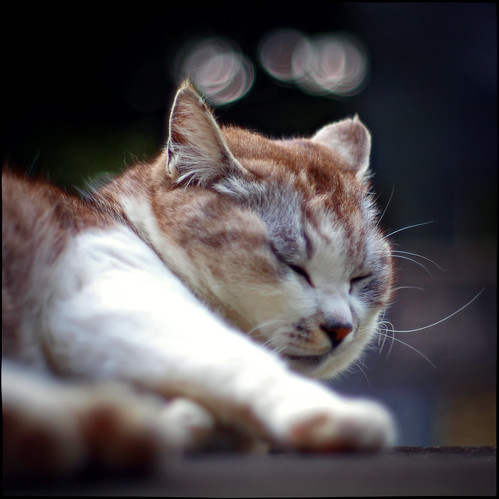 Sleeping, With Bokeh