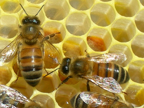 uses for raw honey