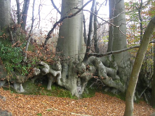 ex hedgerow