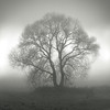 A Tree at The Fog