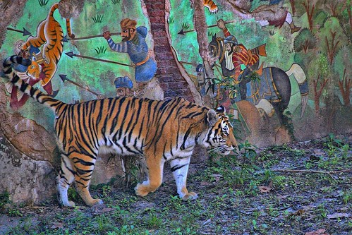Disney - Maharajah Jungle Trek Tiger