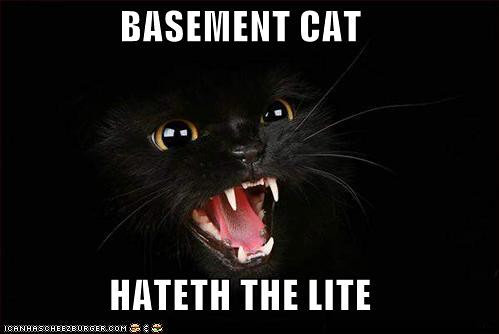 basement cat flickr photo sharing