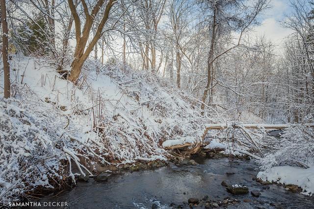 Winter at Spring Run