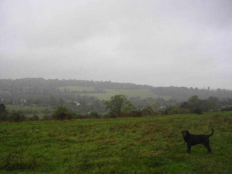 On Farthing Down Riddlesdown to Coulsdon The dog's a Schnauzer / Labrador cross by the way.
