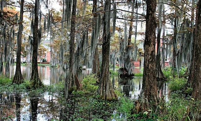 Cypress Lake At UL-Lafayette Campus