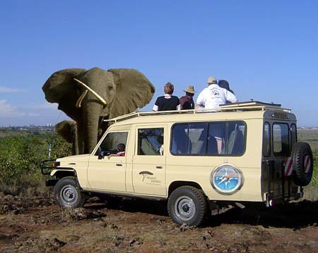 apple-safari-jeep