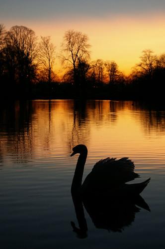sunset silhouette landscape swan twilight pentax super naturesfinest supershot k100d mywinner karmapotd platinumphoto diamondclassphotographer theunforgettablepictures brillianteyejewel justpentax theperfectphotographer