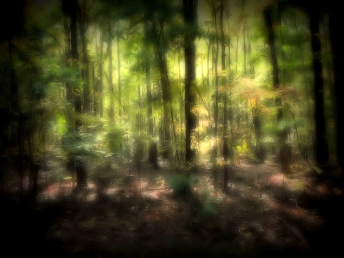 trees light sun sunlight forest georgia psp woods shadows foliage shade mystical paintshoppro magical canonpowershots2is douglascounty sweetwatercreekstatepark ©melissapadilla