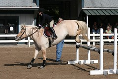 2019 year for girls- Horse Fjord jumping pictures