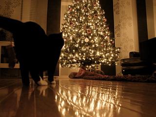 Cats and the Xmas Tree