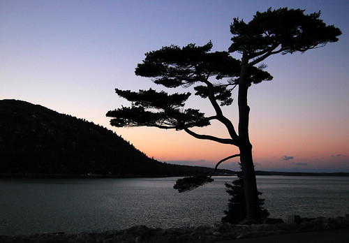 sunset topf25 fjord iconic acadia mountdesertisland thetree somessound sargentdrive northeastharbor blueribbonwinner passionphotography impressedbeauty