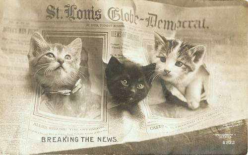 Newsies Mewsies - Breaking the News