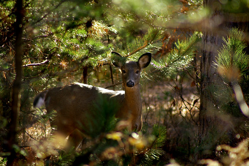 deer rebelxt anawesomeshot higleyflow