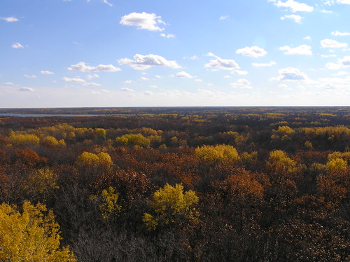 autumn trees usa minnesota millelacs