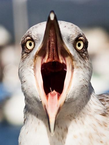 El grito de la gaviota - Seagull scream