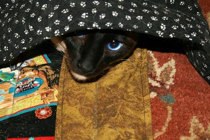 Kitten in a Pootie Pad sandwich