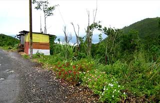 Jamaica Roadtrip