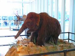 art, animal, elephants and mammoths, fauna,