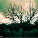 """""""Atmosfera Surreale"""" by Andrea Mignano Fotografia"""