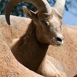 Los Angeles Zoo 034