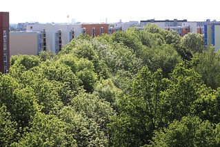 Wood in Munich Neuperlach