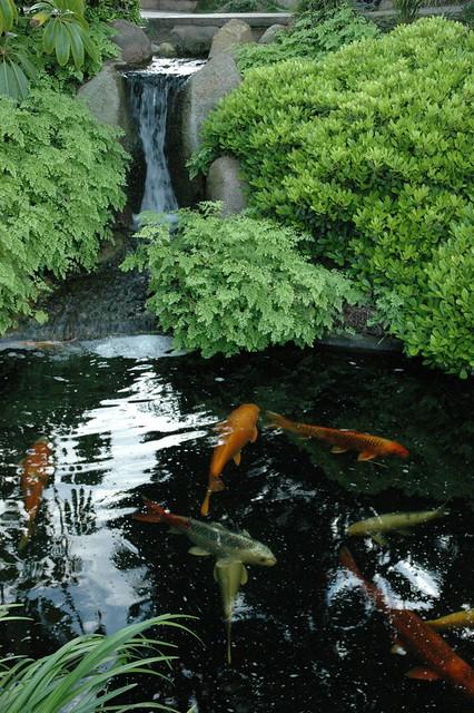 Koi Pond Meditation Garden Self Realization Fellowship Encinitas California Usa 3608