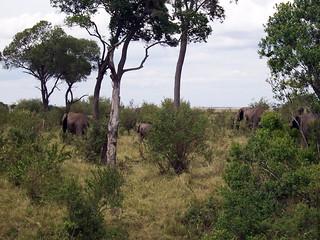 Camouflaged Elephants