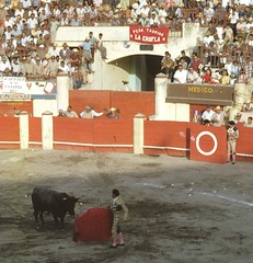 animal sports, cattle-like mammal, bull, event, tradition, sports, bullring, matador, performance, bullfighting,