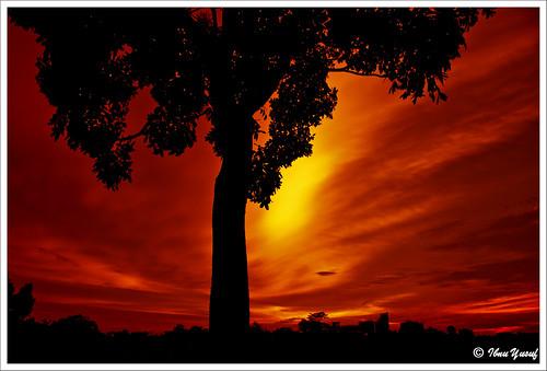 sunset tree bravo sundown malaysia a200 soe selangor shahalam cubism magictree themoulinrouge naturesfinest blueribbonwinner sonydslr abigfave asiseeit platinumphoto anawesomeshot colorphotoaward superbmasterpiece citrit ibnuyusuf platinumphotography theperfectphotographer goldstaraward mysonia nearthepalace beautifusecrets