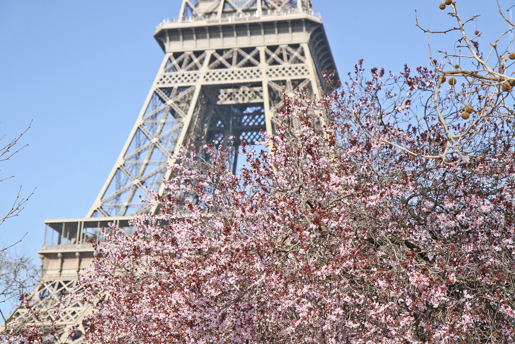 Cherry blossom in the Champ de Mars-6.jpg