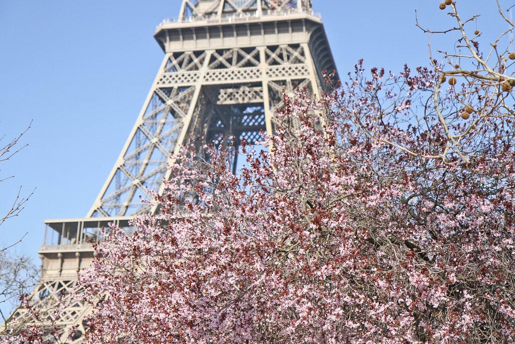Cherry blossom in the Champ de Mars-6.jpg