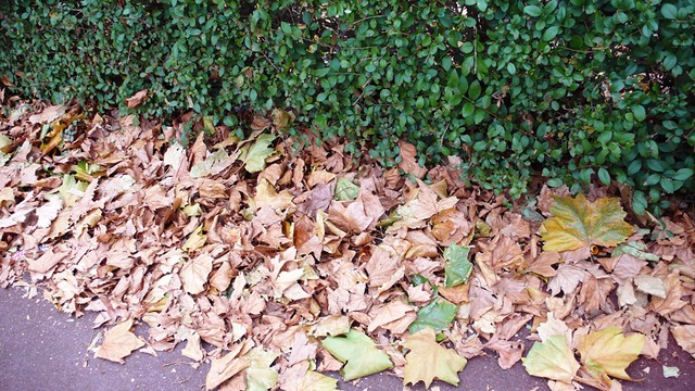 Autumn Leaves in Oxlow Lane, Dagenham