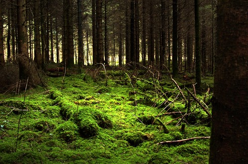 trees light green forest carpet moss woods nikon clare floor polarizer limerick naturesfinest cratloe